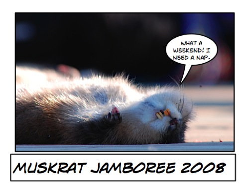 b-muskrat-caption.jpg